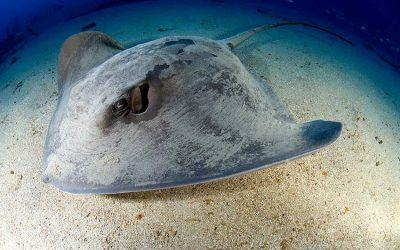 La Graciosa, the Best place to scuba dive